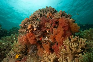 softcoral-wakatobi-photo-course