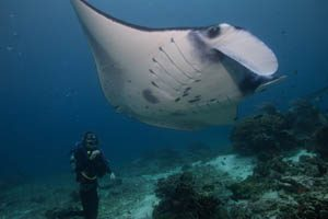 watch-manta-komodo-point