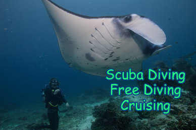 indonesia-komodo-castle-rock-sharks-giant-trevalley-liveaboard-Duyung-Baru