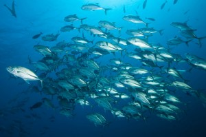 trevally-school-castle-rock-